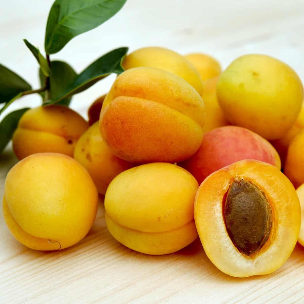 Apricot Mt Baker Vapor Flavor Concentrate
