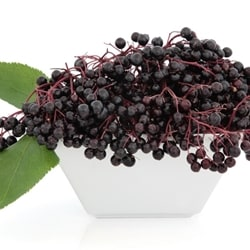 The Flavor Apprentice - Elderberry